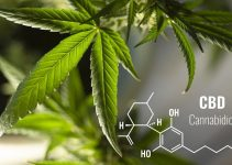 How Long Does CBD Stay in Your System? The Ultimate Guide